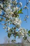 цветки 3 Стоковое Фото