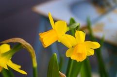 Цветки 8 Стоковое Изображение