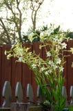 Цветки alata Nicotiana против неба и загородки Стоковое Изображение