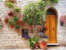 цветки assisi стоковое фото rf