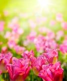 Цветки backsround весны искусства одичалые в солнечном свете Стоковые Изображения