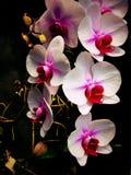 Цветки Beatutiful Стоковое Фото