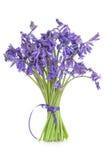 цветки bluebell стоковые изображения rf