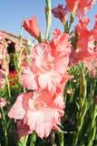 Цветки Canna в предпосылке bokeh Стоковое Изображение RF