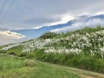 Цветки Catkins Стоковая Фотография