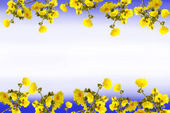 Цветки chrysantha Tabebuia рамки стоковое изображение