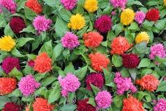 цветки colorfull Стоковые Изображения RF