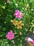 Цветки Colrful стоковая фотография rf
