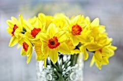 Цветки Daffodil Стоковое Фото