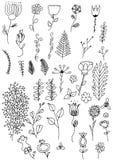 Цветки Doodle нарисованные рукой Стоковые Фото