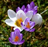 Цветки Exmoor Стоковые Фото