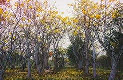 Цветки FAIKHAM Стоковое Изображение RF