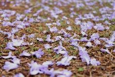Цветки Falled Стоковое Изображение RF
