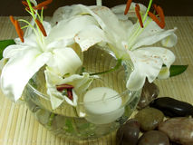 цветки feng стоковые изображения