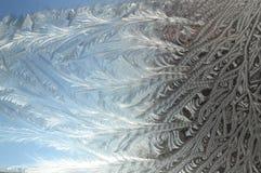 Цветки Frost Стоковое Изображение RF