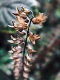 Цветки frutescens Perilla выглядят как строка фонариков стоковые фотографии rf