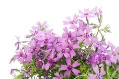 цветки gentle розовая открытка стоковое фото rf