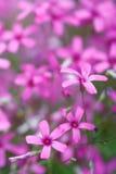 Цветки gentle розовая предпосылка крупного плана лепестков Стоковые Изображения RF