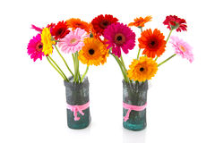 Цветки Gerber в вазах Стоковые Изображения RF