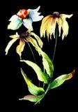 Цветки Gerber и Narcissus Стоковые Фото