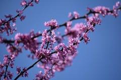 Цветки i увиденное в Granbury Техасе 17-ое марта Стоковое фото RF