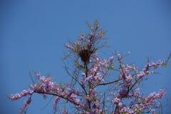 Цветки Inthanin Стоковые Изображения RF