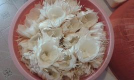 Цветки Kadupul Стоковое Изображение RF