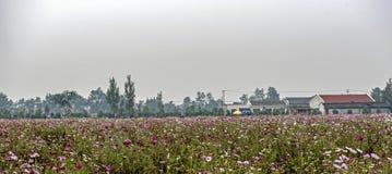 Цветки Kelsang перед сельским домом Стоковые Фотографии RF