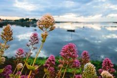 Цветки Kinvarra Стоковые Фотографии RF
