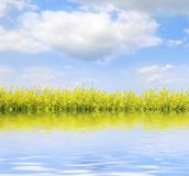 цветки landscape желтый цвет Стоковые Фото