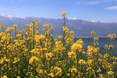 Цветки moutain и рапса снега озера Стоковое фото RF