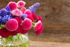 Цветки Muscari и маргаритки Стоковое фото RF