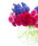 Цветки Muscari и маргаритки Стоковое Фото