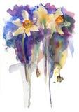 Цветки narcissus акварели Стоковые Фотографии RF