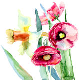 Цветки Narcissus и мака Стоковые Фото