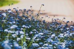цветки Nu-мам-uita Стоковые Фото