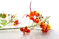 Цветки Orang Стоковое Фото