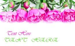 Цветки Peony Стоковые Изображения RF