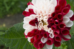 цветки pink 2 Стоковые Фотографии RF