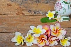 Цветки Plumeria закрывают вверх Стоковые Фото