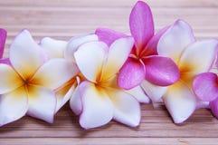 Цветки Plumeria Стоковая Фотография