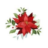 Цветки poinsettia рождества Иллюстрация штока