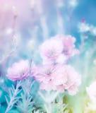 Цветки Portulaca grandiflora Стоковое Изображение RF