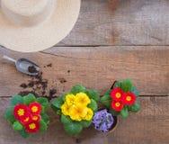 Цветки Primula первоцвета Vulgaris, желтые и красные сада, в горшке, инструменты, концепция открытки весны садовничая стоковая фотография rf