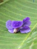 Цветки Pwgcram Стоковое фото RF
