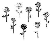 Цветки Rose Стоковые Фотографии RF