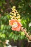 Цветки Salavan Стоковая Фотография RF