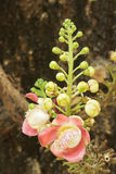 Цветки Salavan, Стоковые Фотографии RF