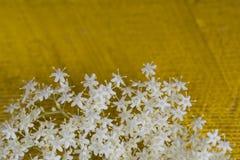 Цветки Sambuco Стоковое Фото