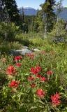 Цветки Sringtime в Bristish Колумбии Держатель Revelstoke Канада стоковое фото rf
